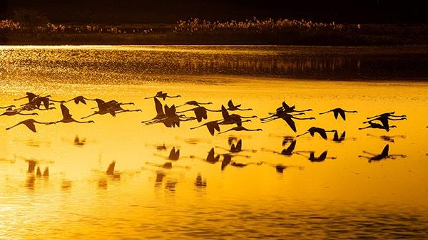 """Düden Gölü'nün zarif misafirleri """"flamingolar"""" 4"""