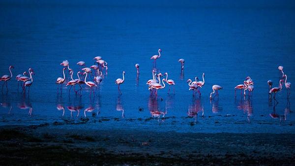 """Düden Gölü'nün zarif misafirleri """"flamingolar"""" 7"""