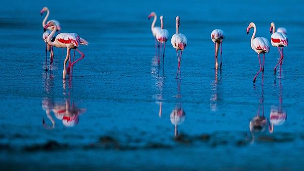 """Düden Gölü'nün zarif misafirleri """"flamingolar"""" 8"""