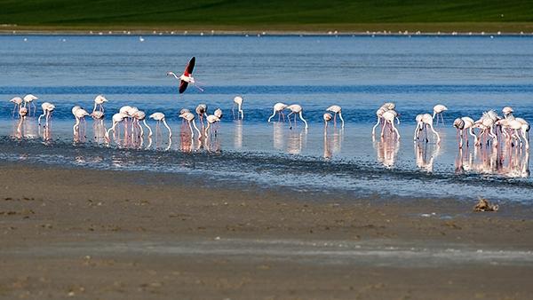 """Düden Gölü'nün zarif misafirleri """"flamingolar"""" 9"""