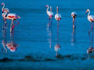 """Düden Gölü'nün zarif misafirleri """"flamingolar"""""""