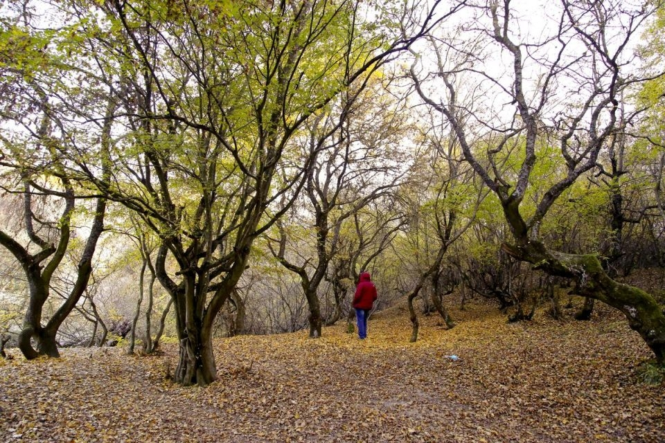 'Gündöndünün' sarısının yerini hazan yaprakları aldı 19