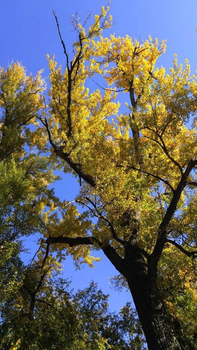 'Gündöndünün' sarısının yerini hazan yaprakları aldı 26