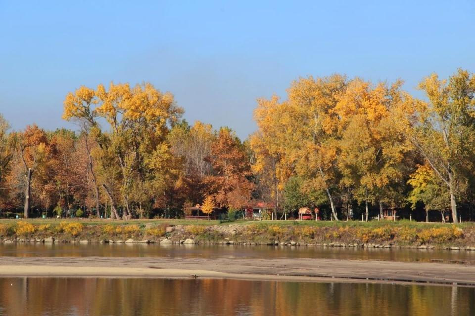 'Gündöndünün' sarısının yerini hazan yaprakları aldı 5