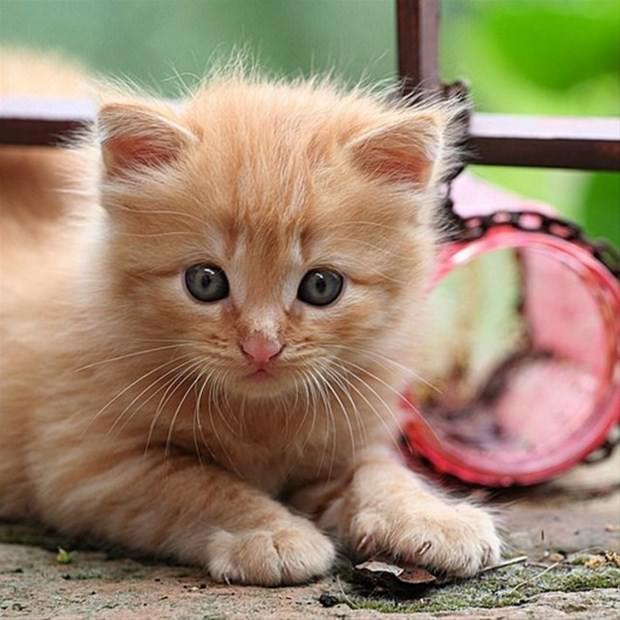 İslam'da kedinin yeri 1