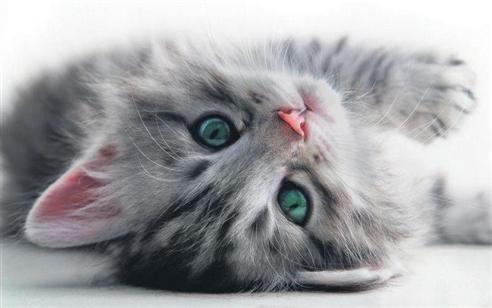 İslam'da kedinin yeri 10