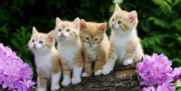 İslam'da kedinin yeri 11