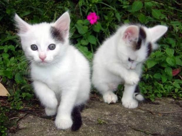İslam'da kedinin yeri 12