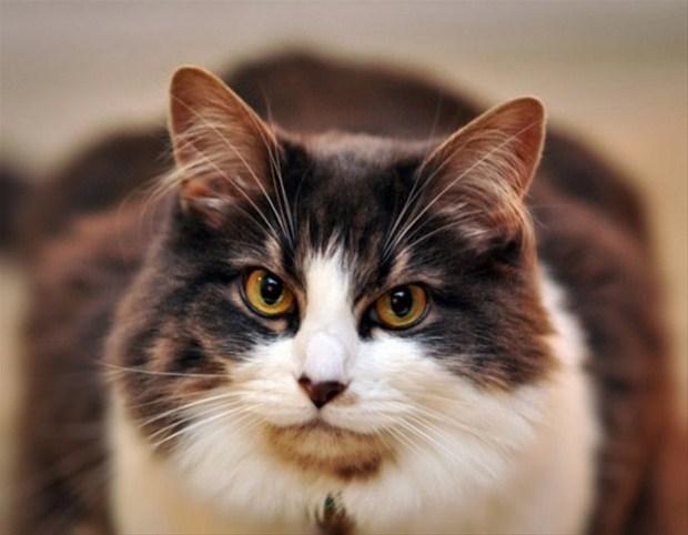 İslam'da kedinin yeri 14
