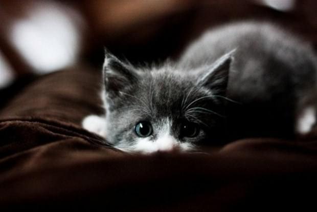 İslam'da kedinin yeri 15
