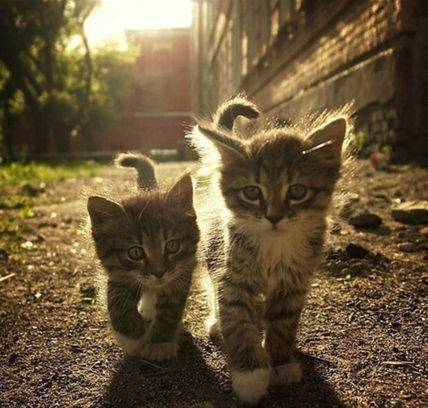 İslam'da kedinin yeri 16