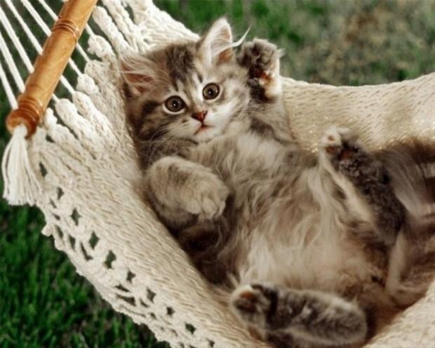 İslam'da kedinin yeri 20