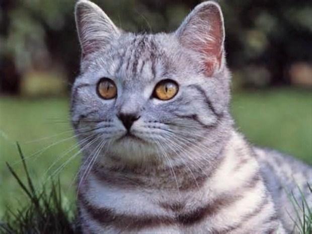 İslam'da kedinin yeri 21