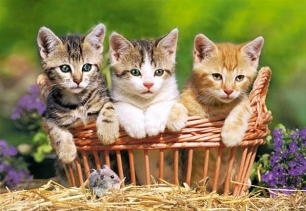 İslam'da kedinin yeri 22