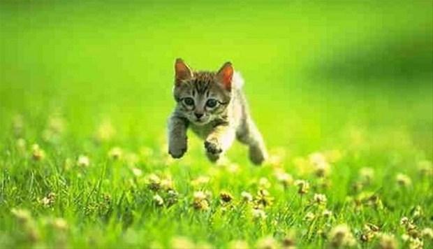 İslam'da kedinin yeri 24