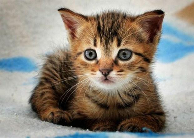 İslam'da kedinin yeri 26