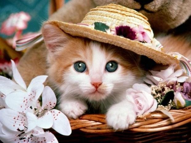 İslam'da kedinin yeri 27