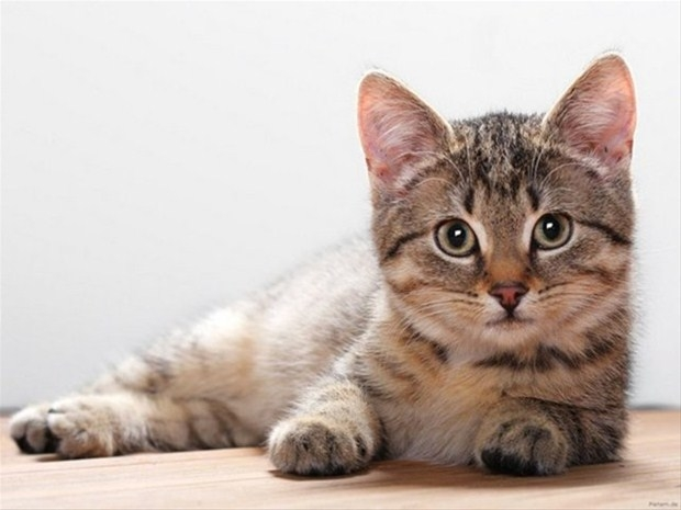 İslam'da kedinin yeri 28