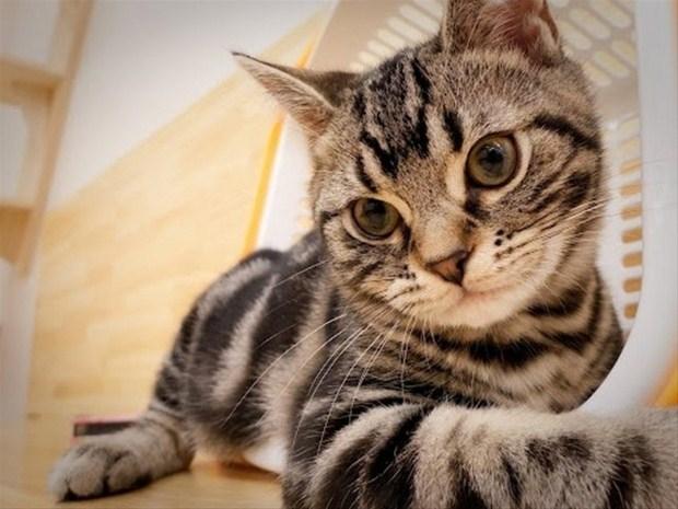 İslam'da kedinin yeri 3