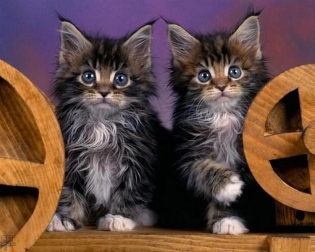 İslam'da kedinin yeri 30