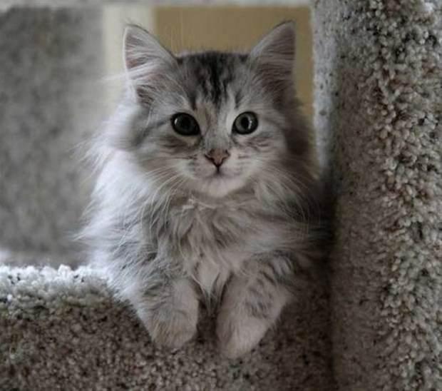 İslam'da kedinin yeri 32