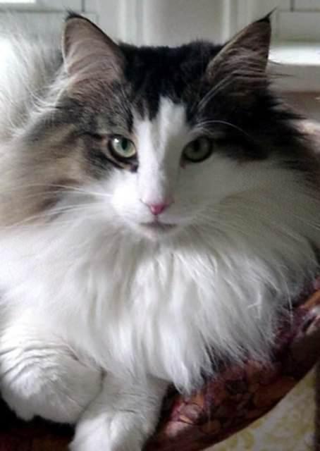 İslam'da kedinin yeri 35