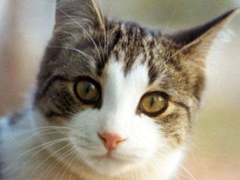 İslam'da kedinin yeri 4