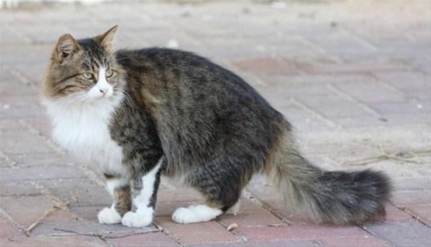 İslam'da kedinin yeri 6