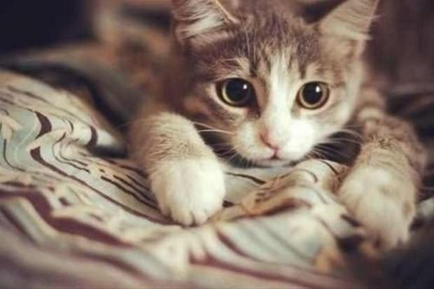 İslam'da kedinin yeri 7