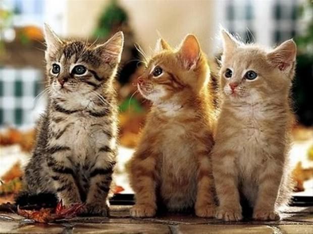 İslam'da kedinin yeri 9