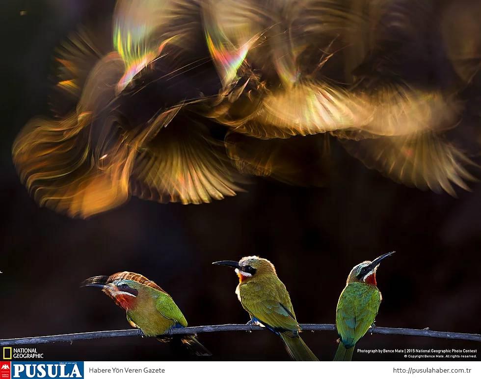 2015 National Geographic Fotoğraf Yarışması Kazananları 1
