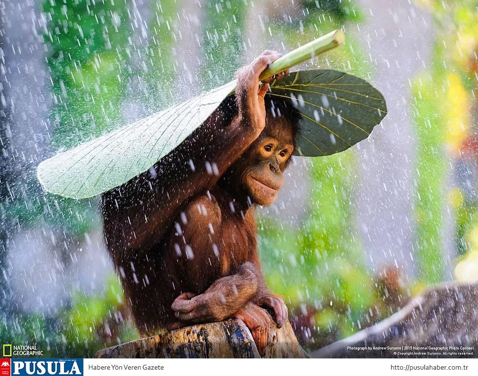 2015 National Geographic Fotoğraf Yarışması Kazananları 10