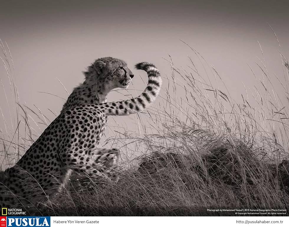 2015 National Geographic Fotoğraf Yarışması Kazananları 2