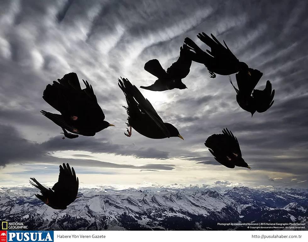 2015 National Geographic Fotoğraf Yarışması Kazananları 4