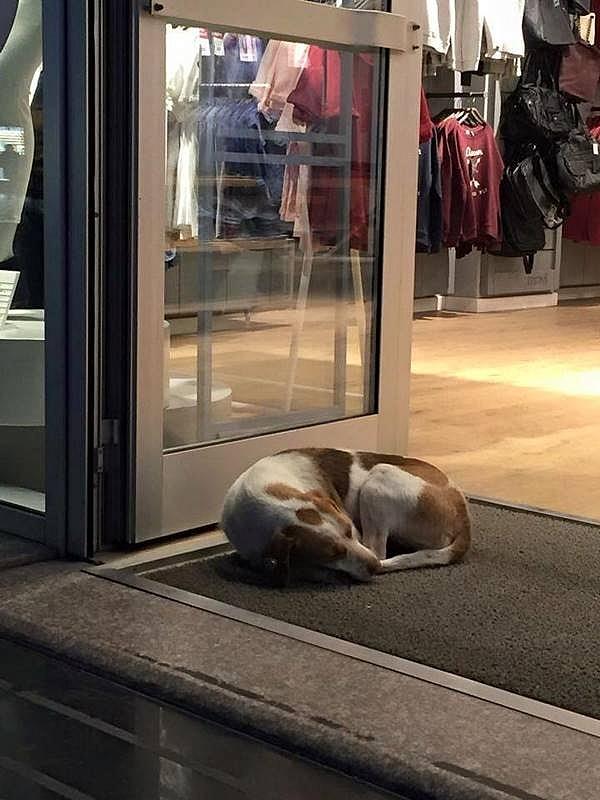 Soğuk Kış Günlerinde Kapılarını Sokak Hayvanlarına Açanlar 20
