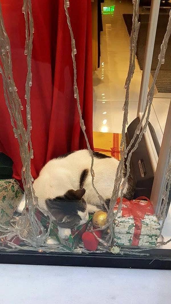 Soğuk Kış Günlerinde Kapılarını Sokak Hayvanlarına Açanlar 6