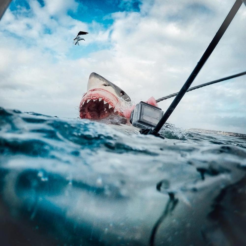 GoPro Kameraları ile Çekilmiş En İyi 10 Fotoğraf 1