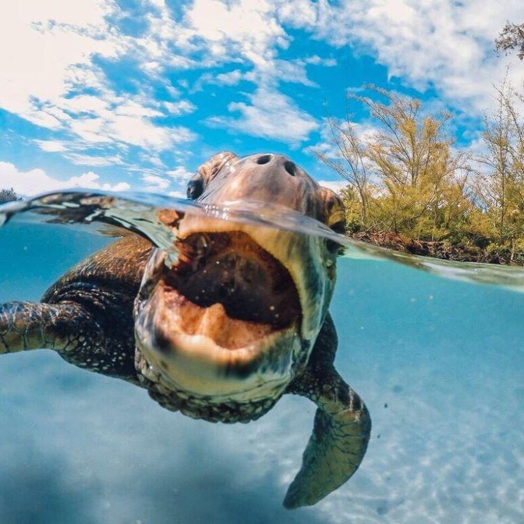 GoPro Kameraları ile Çekilmiş En İyi 10 Fotoğraf 8