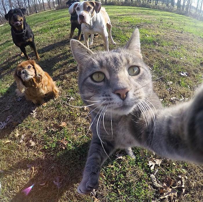 Selfie çekinen sevimli kedi 1