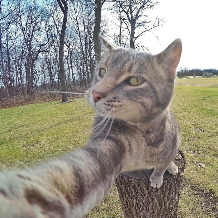 Selfie çekinen sevimli kedi 2