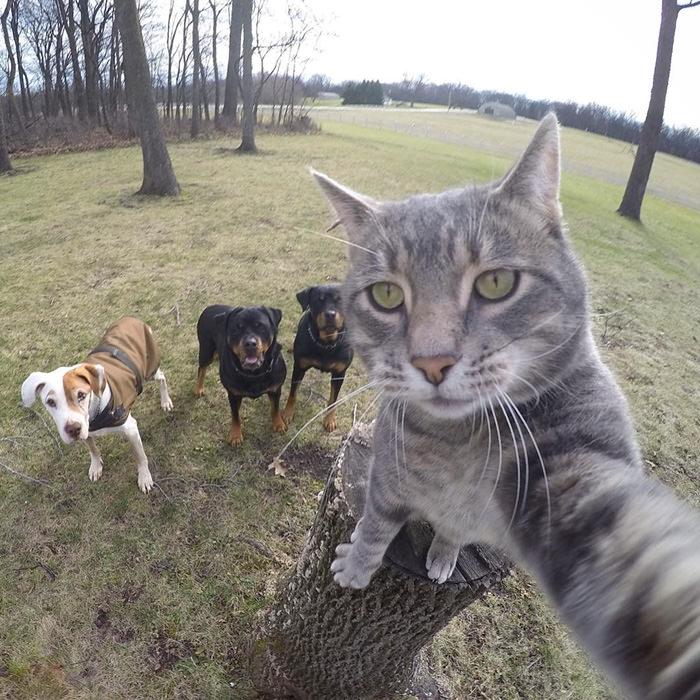 Selfie çekinen sevimli kedi 3