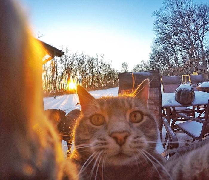 Selfie çekinen sevimli kedi 4