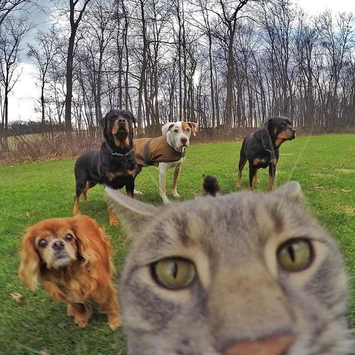 Selfie çekinen sevimli kedi 5