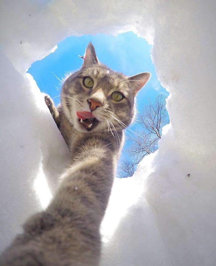 Selfie çekinen sevimli kedi 6