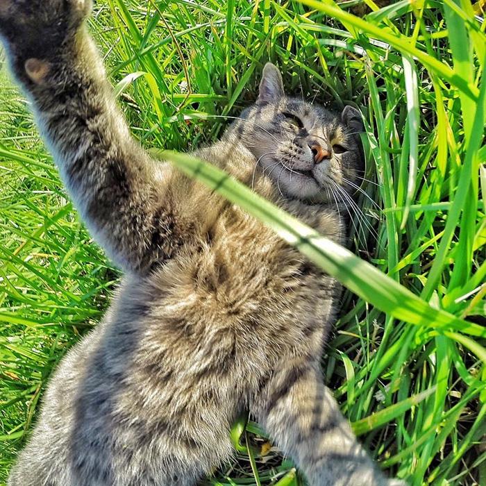 Selfie çekinen sevimli kedi 8