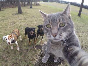 Selfie çekinen sevimli kedi