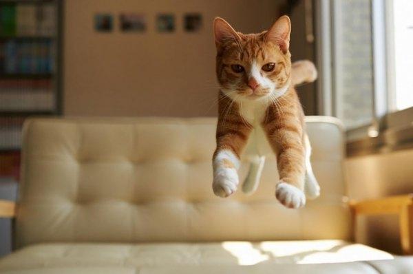 Birbirinden ilginç kedi fotoğrafları 10