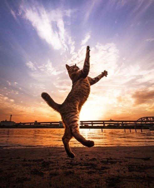 Birbirinden ilginç kedi fotoğrafları 11
