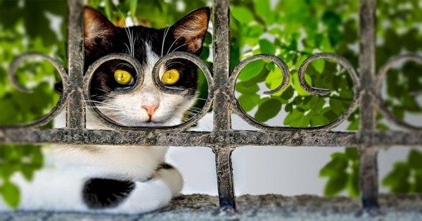 Birbirinden ilginç kedi fotoğrafları 12