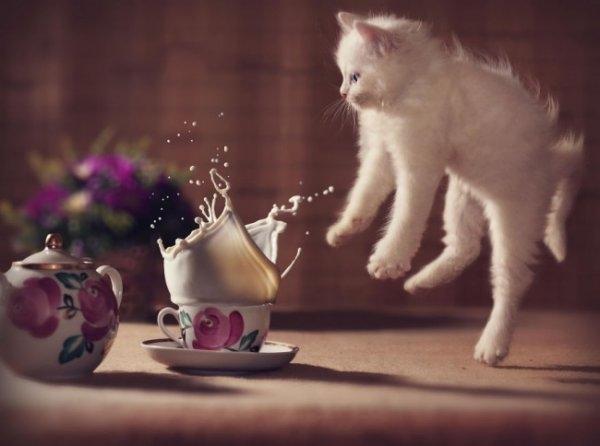 Birbirinden ilginç kedi fotoğrafları 13